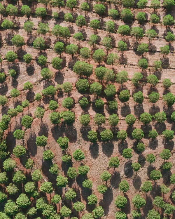 Umjetnička fotografija Pine Trees