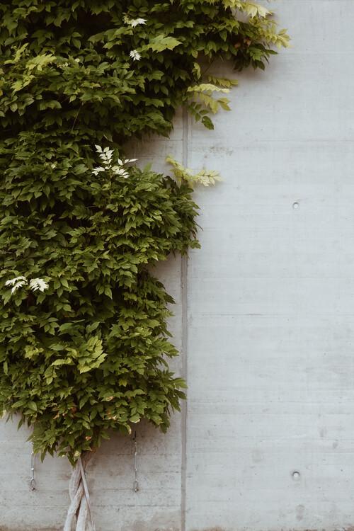Umjetnička fotografija The Wall