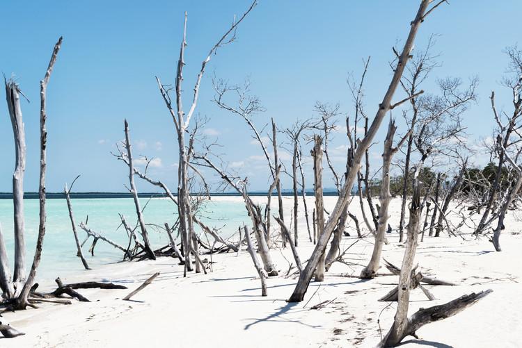 Umjetnička fotografija Tropical Wild Beach