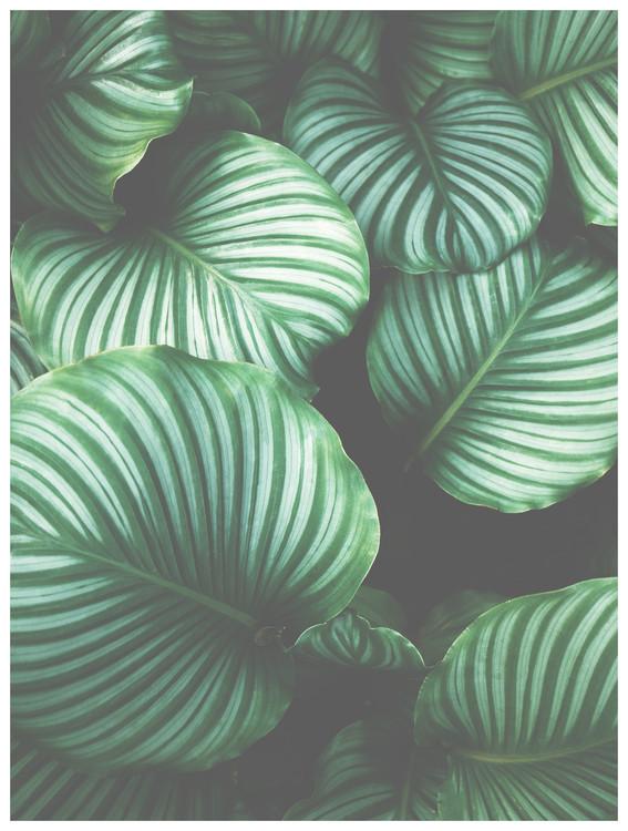 Umjetnička fotografija Border green leaves
