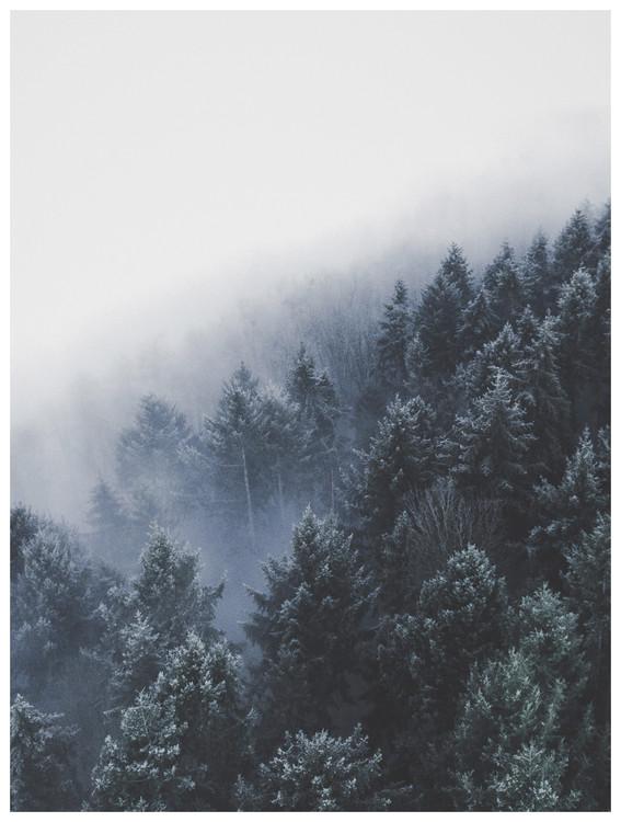 Umjetnička fotografija bordertreevalley