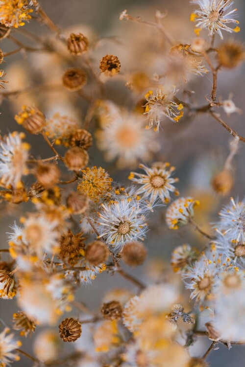 Umjetnička fotografija Dry plants with orange tone