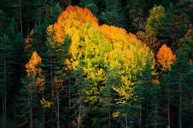 Umjetnička fotografija Fall colors trees