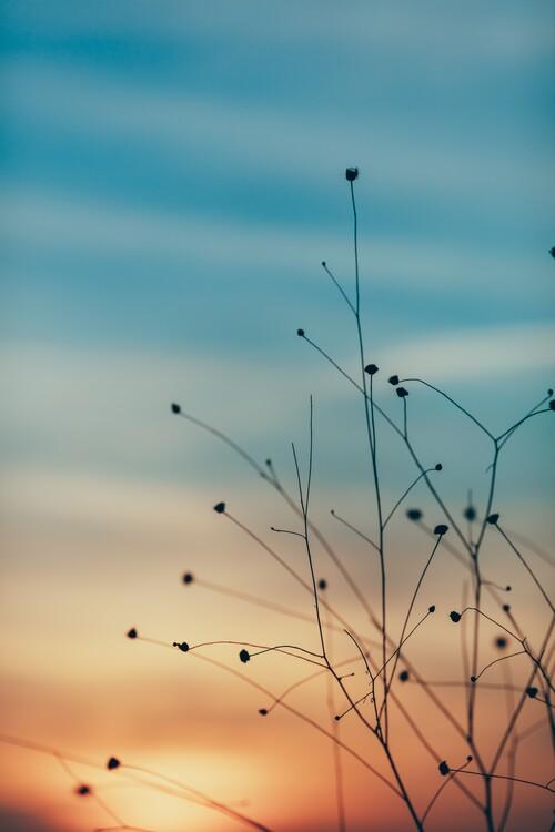 Umjetnička fotografija Golden hour