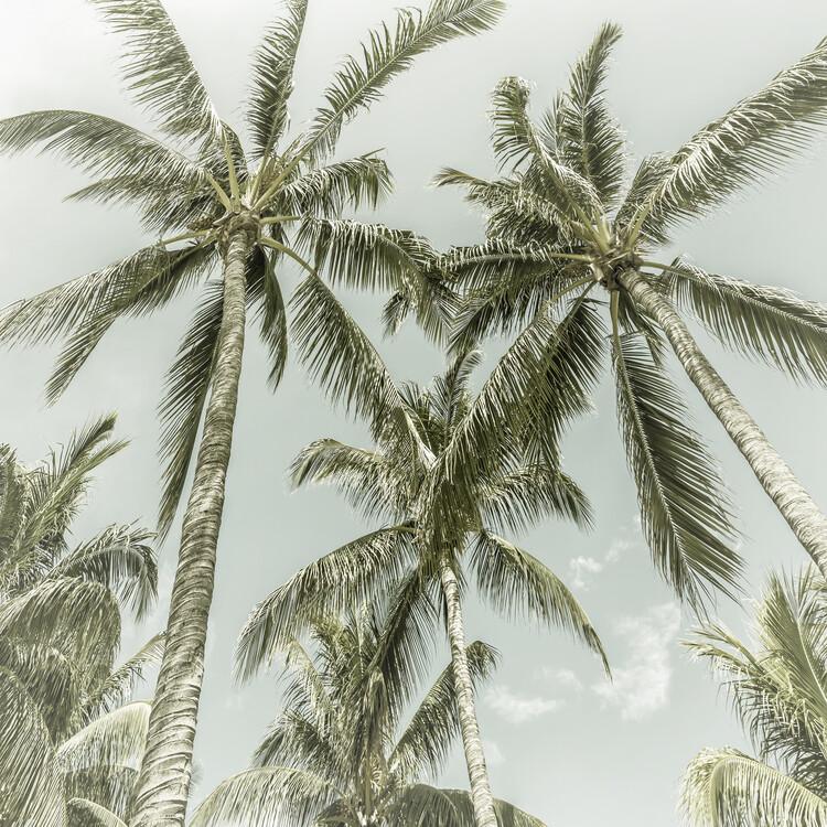 Umjetnička fotografija Lovely Vintage Palm Trees