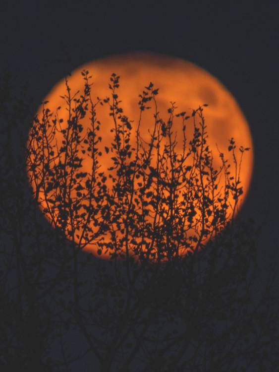Umjetnička fotografija sunposter1