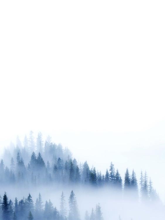 Umjetnička fotografija treeblue2