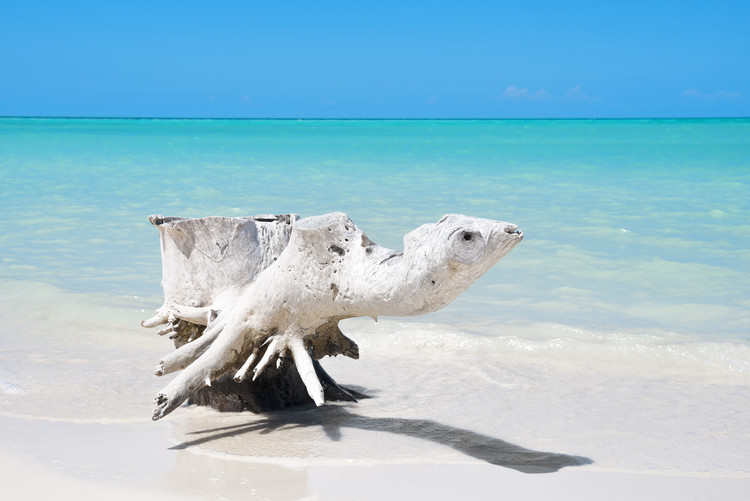 Umjetnička fotografija Wooden Turtle on the Beach