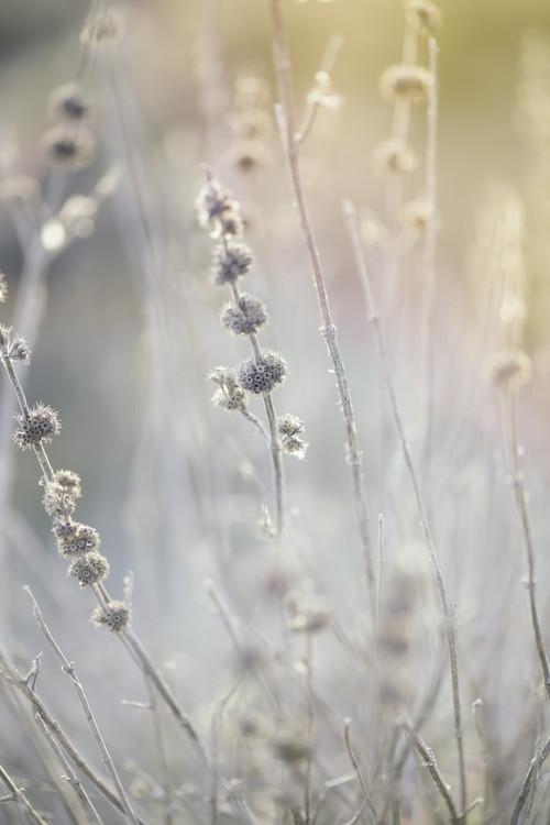 Vászonkép Dry plants at winter