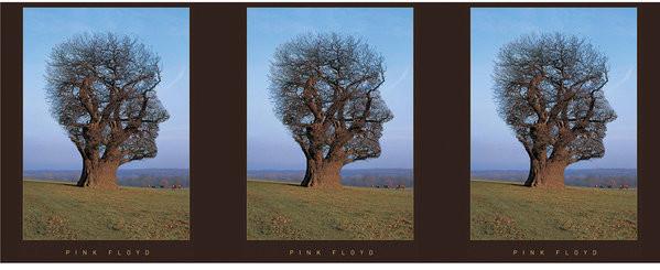Pink Floyd - Tree Skodelica