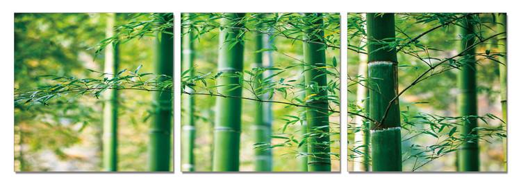 Wandbilder Bamboo Forest - Leaves