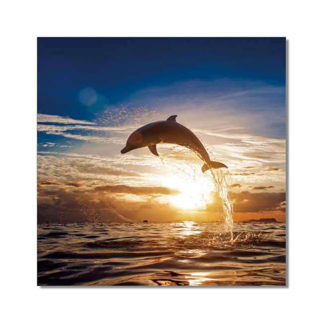 Wandbilder Dolphin during sunset