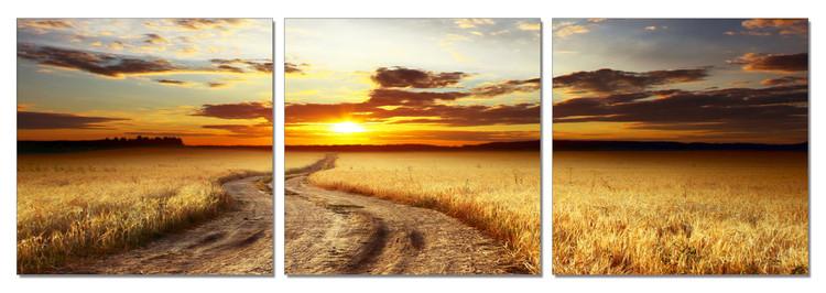 Wandbilder Field - a Way to the West