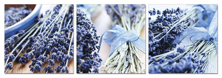 Wandbilder Lavender - Collage