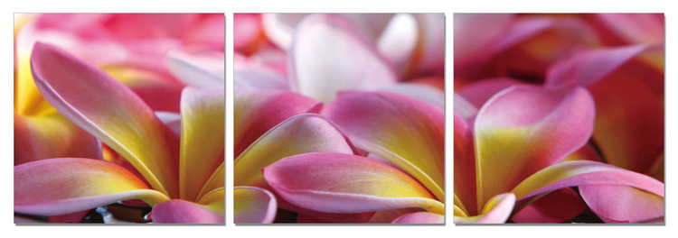 Wandbilder Pink Blossoms