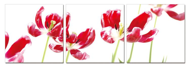 Wandbilder Tulips