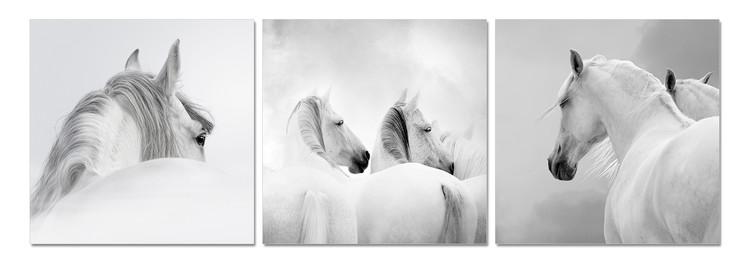 White horses Tableau Multi-Toiles