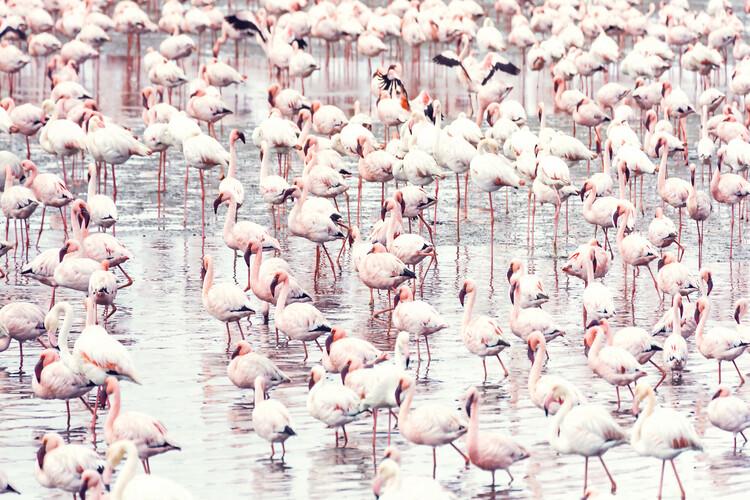xудожня фотографія Flock of flamingos