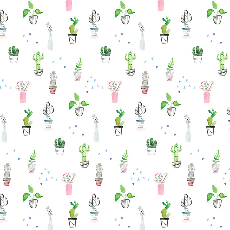 xудожня фотографія Houseplants and cacti