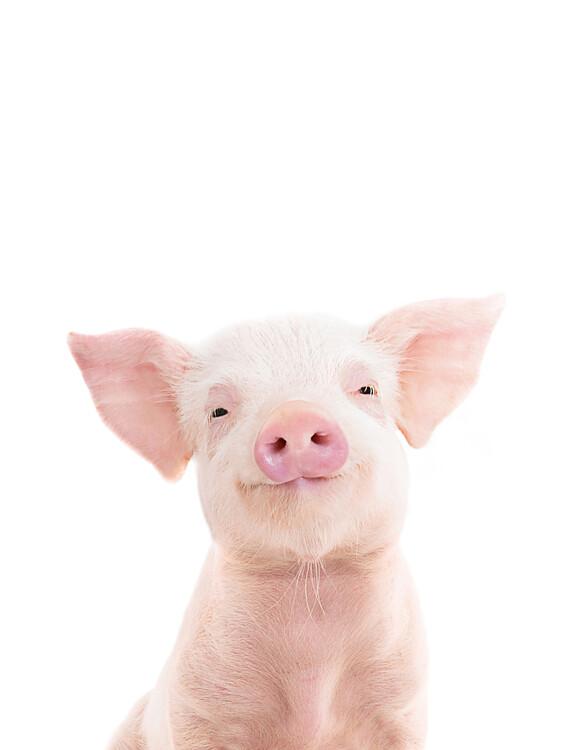 xудожня фотографія Piglet