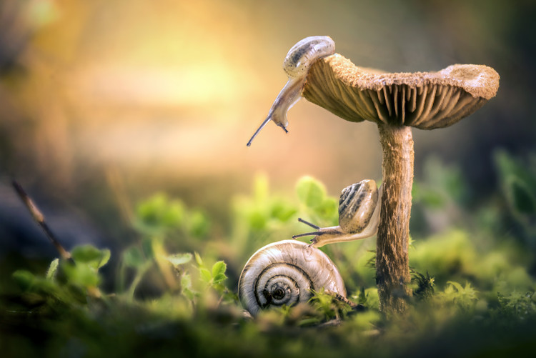 xудожня фотографія The Awakening of Snails